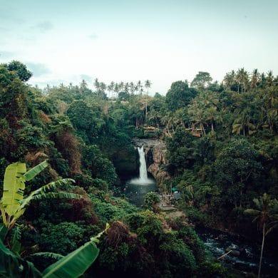 , Top 10 Most Beautiful Jungles, Phenomenal Place