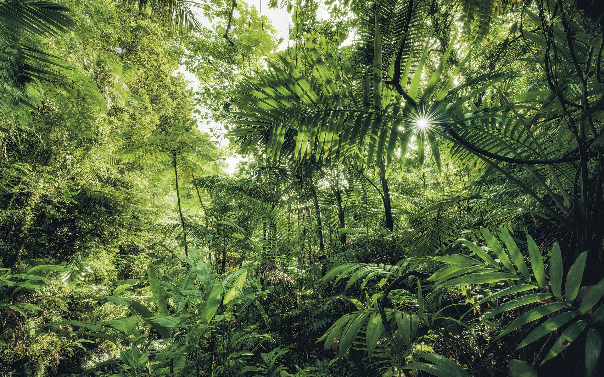 jungle, Top 10 Most Beautiful Jungles of the World (Updated 2021), Phenomenal Place