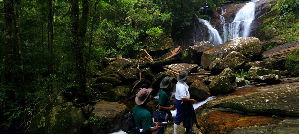 Sinharaja Forest Reserve, Sinharaja Forest Reserve: Must-Know Information and Guide (Updated 2021), Phenomenal Place
