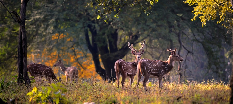 kanha national park, Kanha National Park: Must-Know Information and Guide, Phenomenal Place