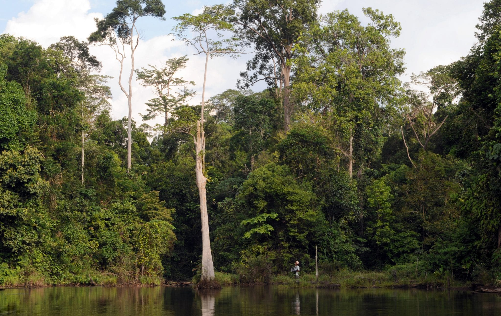 harapan rainforest, Harapan Rainforest: Must-Know Information and Guide, Phenomenal Place